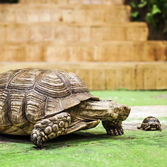 черепахи_MULTIZOO_будні_один дорослий та дитина_04