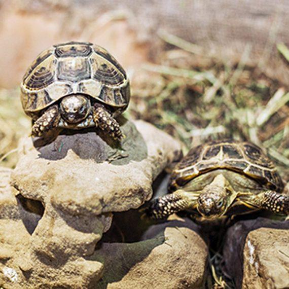 черепахи_MULTIZOO_будні_два дорослих і дитина_03